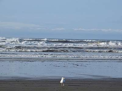 Merry Christmas from Beautifully Sunny Ocean Shores, WA on